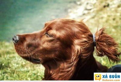 :v  tụi nó khen con chó đẹp trai ... nghe như cắt từng đoạn ruột , thôi em ở ẩn luôn mấy thánh à :((  haivl