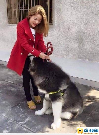 :x  cái loại, chó không phải người  :x  -  haivl | hài hước | hài vl